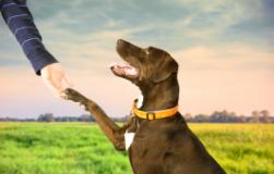 狗狗挑食怎么办 解决狗狗挑食的根源及办法介绍