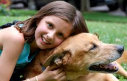 喜欢养大型犬的朋友有福利了 这几款推荐