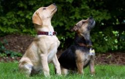 皇家狗子的风采如何 美国历届总统养的狗狗
