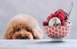美国狗证上的10句话,狗狗想要的其实不多,你都做到了吗?